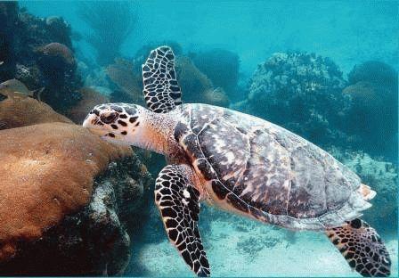 К чему снится черепаха в воде женщине